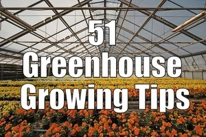 51 Greenhouse Growing Tips